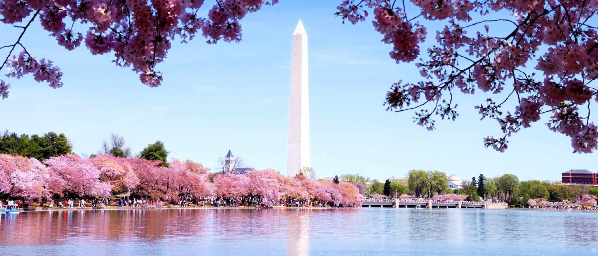 Sheraton Suites Old Town Alexandria Cherry Blossoms and The Washington Monument